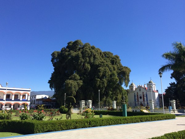Oaxaca, Arbol del Tule