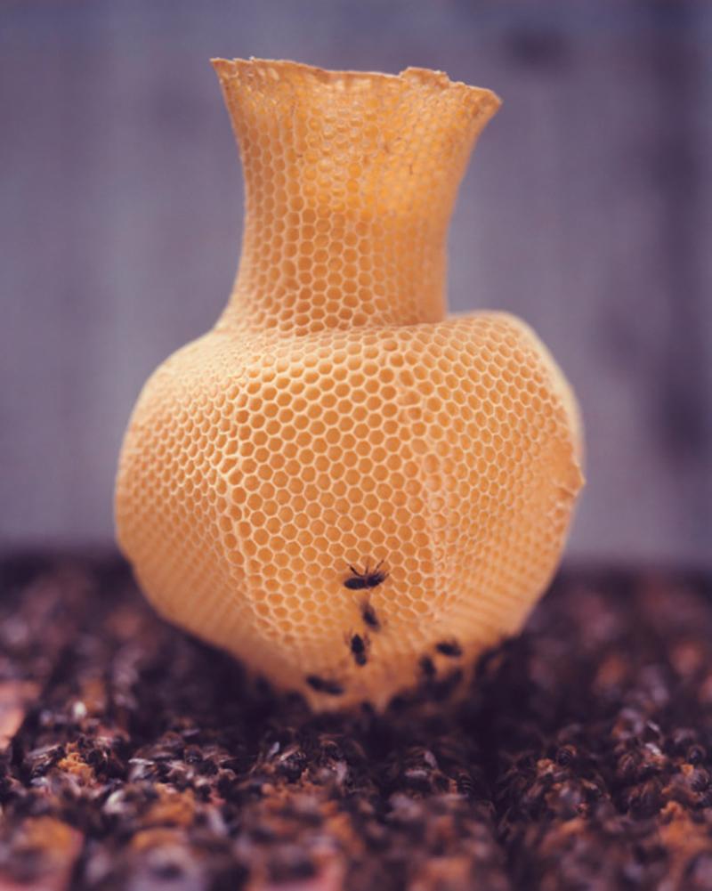 Honeycomb Vase by Tomáš Gabzdil Libertíny; © Raoul Kramer