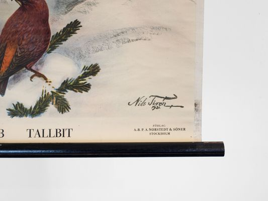 Cartellone educativo con uccelli di nils tiren per nordstedt & söner