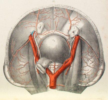 Der Menschliche Körper Anatomie Lehrtafel von M. J. Weber für Arnz ...