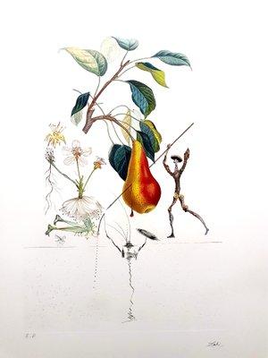 I Donchisciotte Del Tavolino.Litografia Don Chisciotte Pera Di Salvador Dali 1969