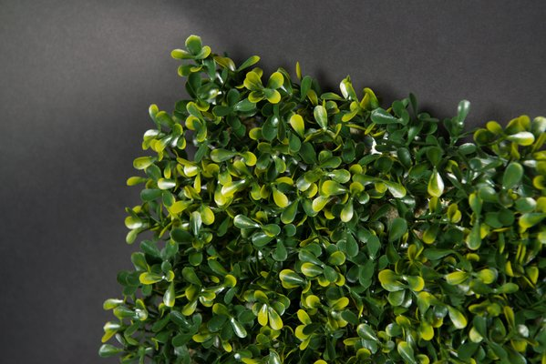 Modular Flat Boxwood Wall Vertical Garden Panel From Vgnewtrend For Sale At Pamono