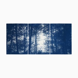 Forest Silhouette Sunset, Blue Nature Large Triptych, Cyanotype on Paper, 2021