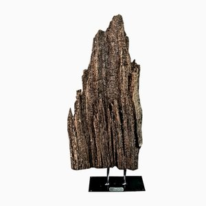 1000-Year-Old Tree Trunk Well Fragment