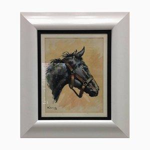 Spanisches Pferd Portrait, 1958, Aliaga, Spanien