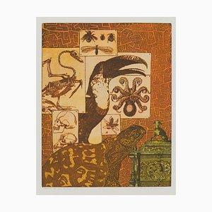 Annemarie Petri, Intérieur d'un Zoologiste, Tortue, 2001