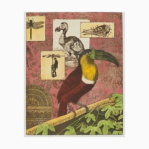 Annemarie Petri, Interior of an Ornithologe, Toucan Bird, 2001