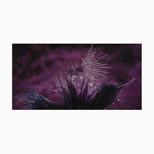 Anna Golovanova, Flower Violet, Digital Photographic Art, 2020