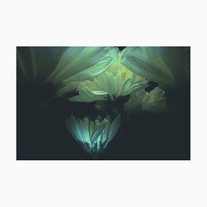 Anna Golovanova, Flower White I, Digital Photographic Art, 2020