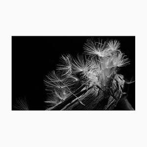 Anna Golovanova, Dandelion Zoom IV, Digital Photographic Art, 2020