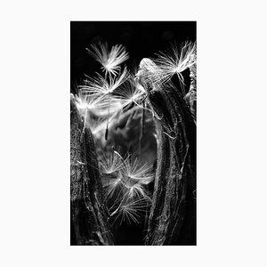 Anna Golovanova, Dandelion Zoom III, Digital Photographic Art, 2020