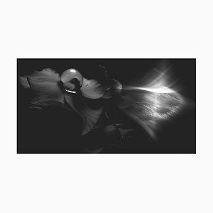 Anna Golovanova, Flower Black White, Digital Photographic Art, 2020