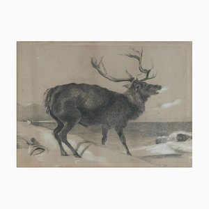 Dipinto a carboncino di alce di Richard Cockle Lucas, 1878