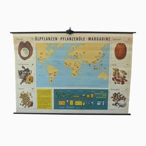 Vintage Educational Plant Chart