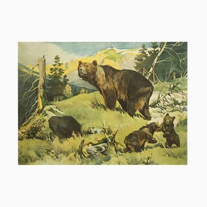 Antique School Bears Wall Chart by Franz Roubal for Leipziger Schulbildverlag, 1930s
