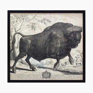 Gravure sur Cuivre, Bison, Commentaires de Jules César, 18ème Siècle