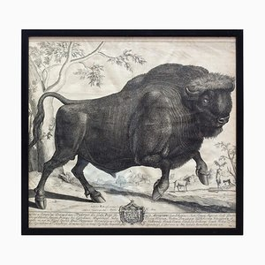 Kupferstich, Bison, 18. Jahrhundert, Kommentare von Julius Cäsar