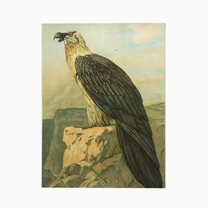 Affiche Educative Aigle Vintage, Allemagne