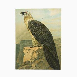 Deutsches Vintage Adler Schulposter
