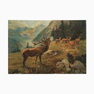 Stampa scolastica vintage raffigurante un cervo, Germania