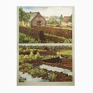 Stampa vintage scolastica dell'estrazione della torba, Germania
