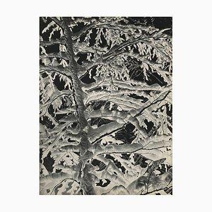 L'inverno nelle Alpi, Karl Machatschek, Revue Verve