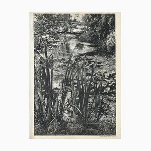 Giverny, Henri Cartier-Bresson, Revue Verve