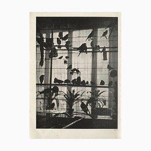 Henri Matisse's Voliere von Brassaï für Revue Verve