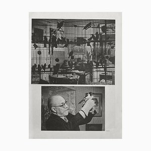 Henri Matisses Birds, Brassaï, Revue Verve