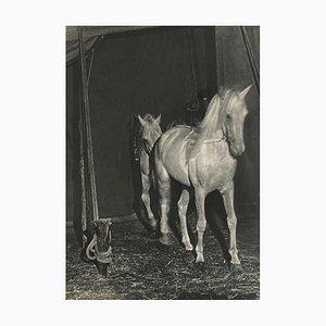 Horses by Brassaï