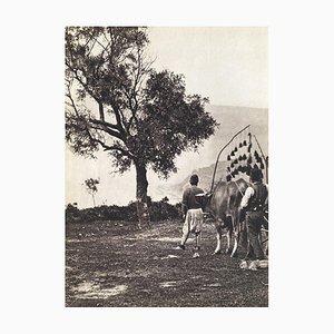 Promenade des Harem (1890) von Revue Verve