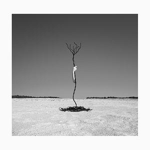 Humain // Nature #9, 2020