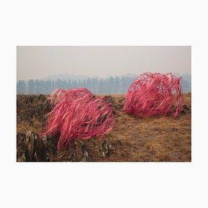 Sophie Dumaresq, the Hairy Panic, Untitled #10, 2020