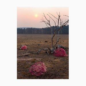 Sophie Dumaresq, the Hairy Panic, Untitled #9, 2019