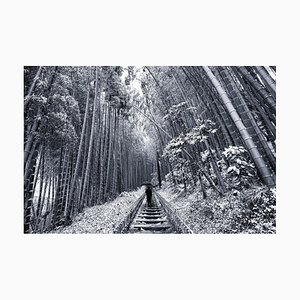 Japanese Winter Wonderland No.2, 2019