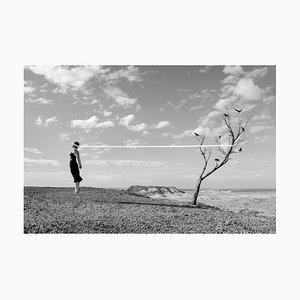 Paysages, Oiseaux, 2016