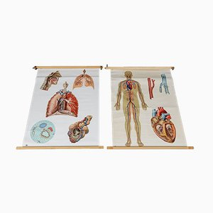 Carteles escolares vintage del sistema circulatorio y respiratorio. Juego de 2
