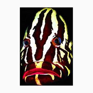 Patrick Chevailler, #518 Nassau Grouper, 2010