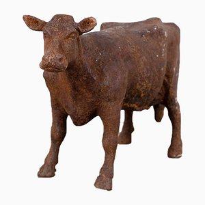 Metzgerei Kuh Auslage