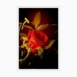 Rosa roja en luz vintage, Impresión Giclée de edición limitada, Naturaleza muerta vertical, 2021
