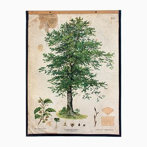 Antique Wall Chart Beech Tree by v. H. Darnaut and G. v. Beck for Gerold & Sohn, 1879