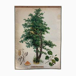 Affiche Aulne par Joh. Kautsky sen. & G. v. Beck pour A. Pichlers Witwe & Sohn, 1879