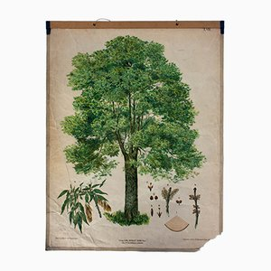 Antique Wall Chart Elm Tree by v. J. Wenzl and Fleischmann for Gerold & Sohn, 1879