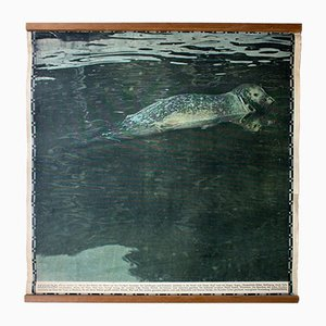 Stampa vintage raffigurante una foca di Schönbrunn