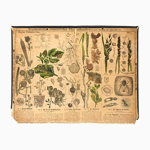 Antique Wall Chart Mushrooms by Zippel and Bollmann, 1879