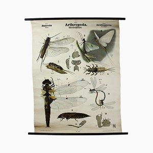 Antike Insekten Lehrtafel von Rudolf Leuckart, 1879