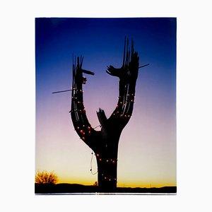 Cactus, Ajo, Arizona, American Landscape Color Photography, 2000