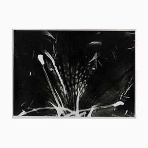Flora Photogram by Enrico Garzaro