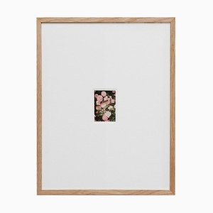 David Urbano, The Rose Garden Nº 34, Contemporary Limited Edition Photography