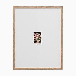 David Urbano, The Rose Garden Nº 34, Fotografía contemporánea edición limitada